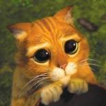 قطط ترتدي أحذية