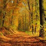فصول السنة الخريف