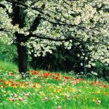 فصول السنة الربيع
