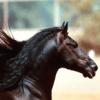 الأحصنة