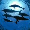 الحيوانات المائية